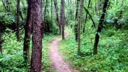 A trail winds through a dense and lush green forest on the Appalachian Trail in Pennsylvania.