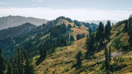 The Pacific Crest Trail in Washington winds across colorful ridgelines through stands of evergreen trees and green meadows with wildflowers.