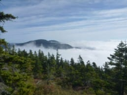 Clouds settle into a valley below an evergreen forest.