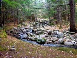 A rocky stream flows through a green forest.