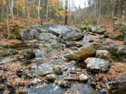 A rocky stream flows through a forest.