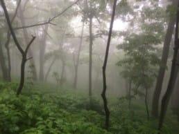 A foggy green forest on the Appalachian Trail.