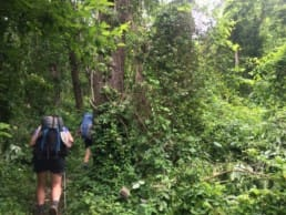 Hikers walk through an overgrown green forest in Virginia on the Appalachian Trail.