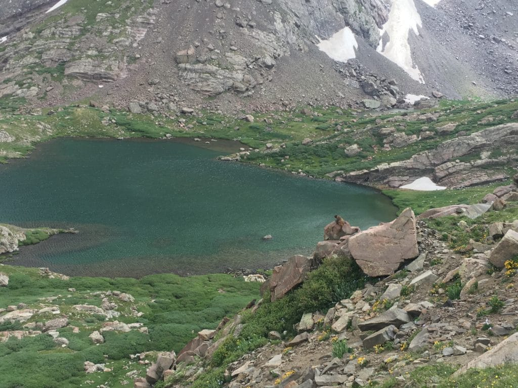Marmots surveying their kingdom at South Colony Lakes.