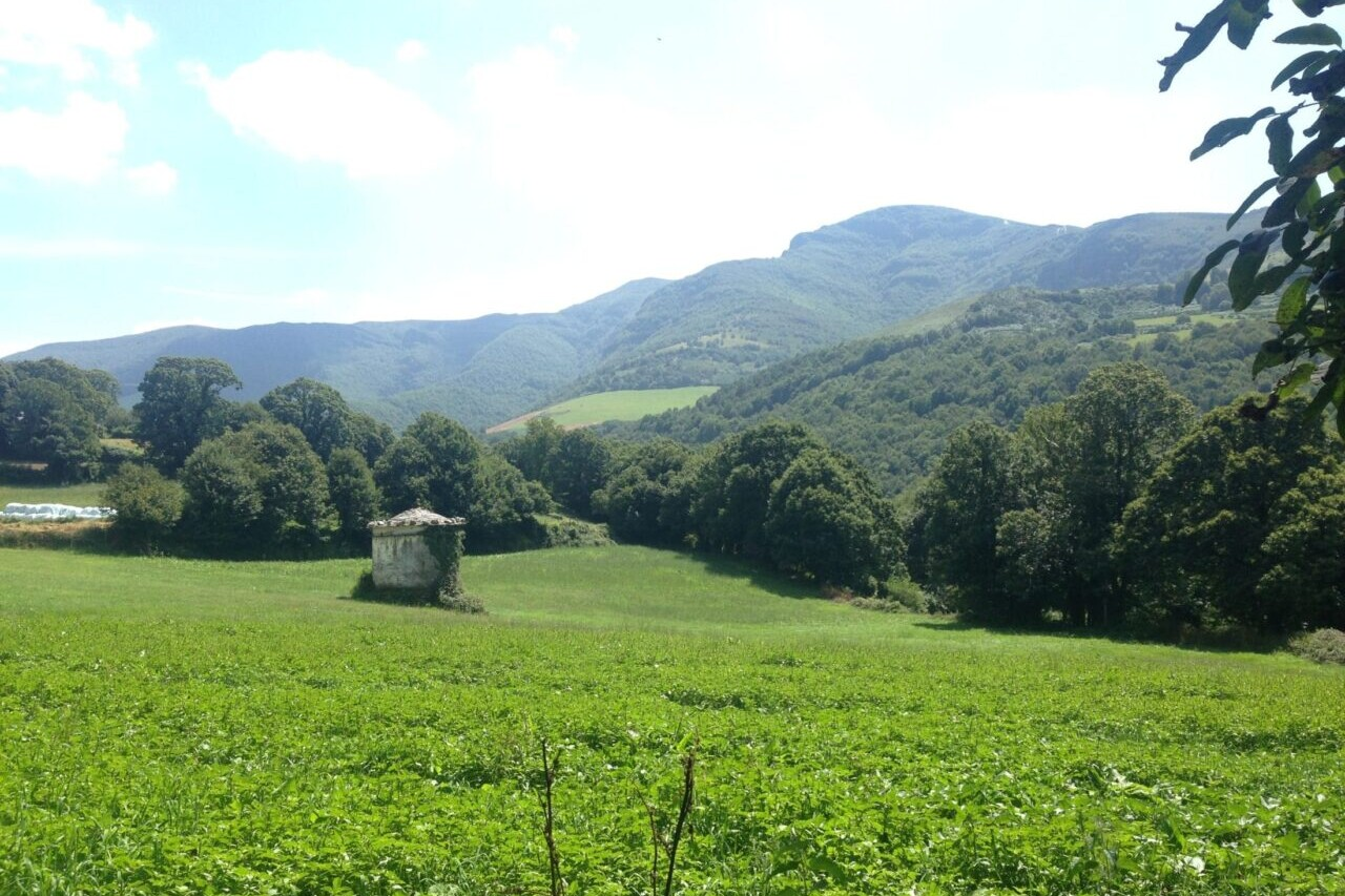 A pastoral landscape of green meadows and green forests has mountains in the background.