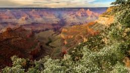 A view from the Arizona Trail on the rim of the Grand Canyon shows a variety of red rock colors and spring foliage.