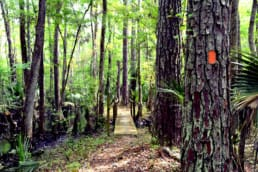 Orange blazes mark the trail leading to a wooden bridge over a creek in a lush tropical forest on the Florida Trail
