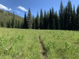 A trail winds through a green meadow. A hiker travels down it towards an evergreen forest.