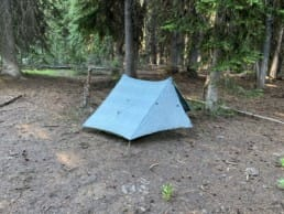A blue tent is set up in a grove of evergreen trees.