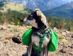 A dog with a green backpack sits in front of a view of mountains.
