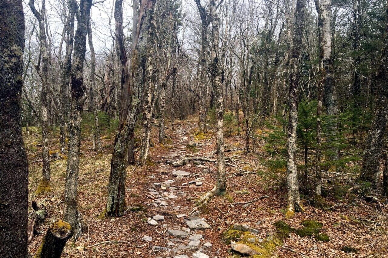 A rocky path travels through a bare deciduous forest.