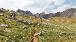 A trail winds through a beautiful field.