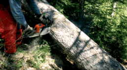 A volunteer wearing red leather chaps uses a chainsaw to cut through a fallen tree in Maine on the Appalachian Trail.