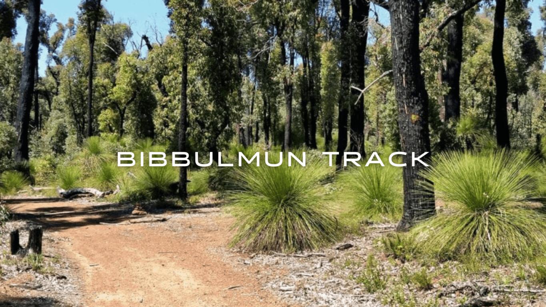 A red dirt trail winds through a green tropical desert forest.