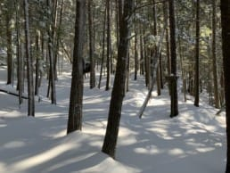 A snowy forest in Camden Hills State Park in Maine