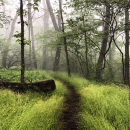A hiking trail through grass and trees.