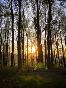 A tent pitched in front of a bunch of tall trees with the sunrise shining through.