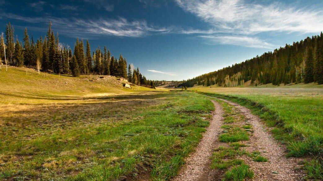 An old dirt road and trail runs through a green meadow towards a coniferous forest and blue sky.