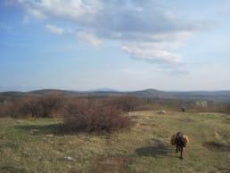 Dog walking across a hilltop