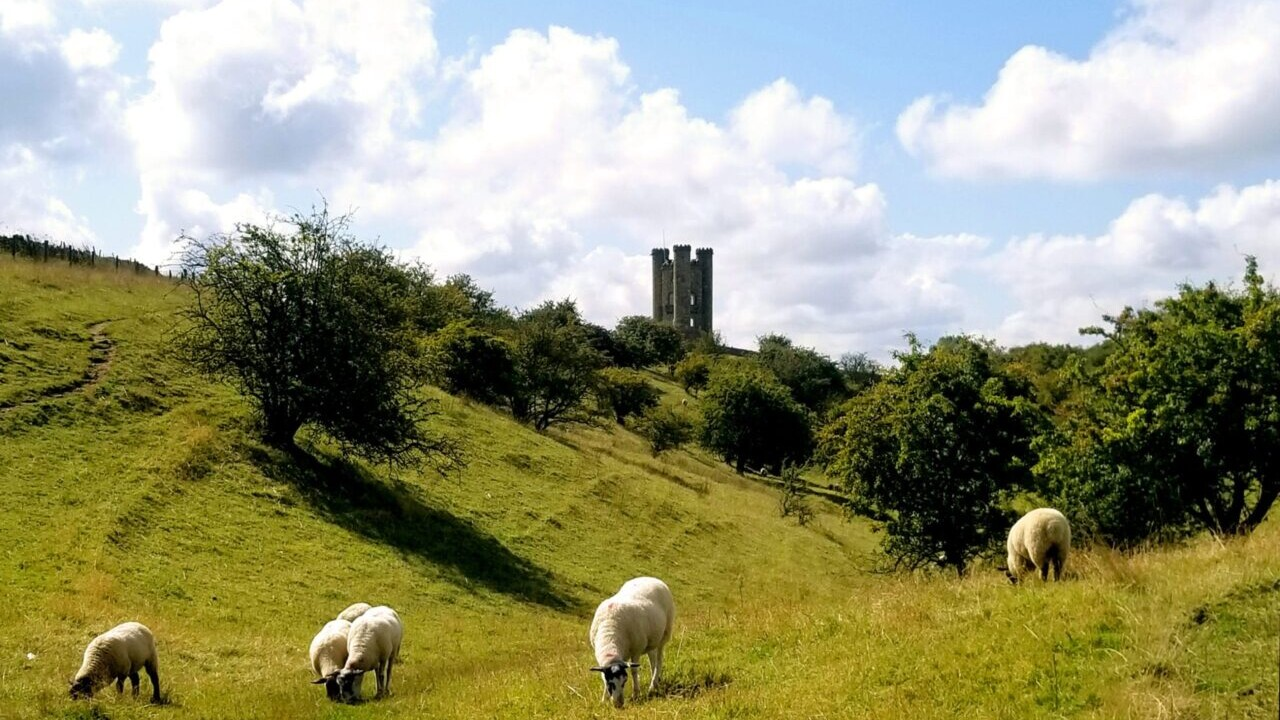 Four white sheep stand in a green field in front of green trees and a tall stone castle.