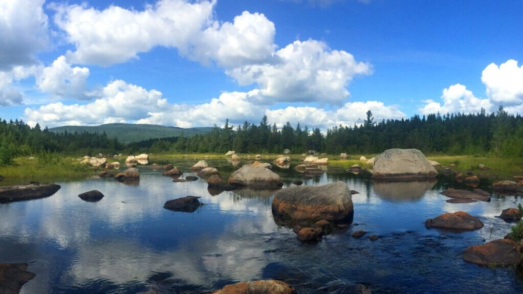 A rocky pond is situated in front of a green meadow and a green forest in front of green mountains.