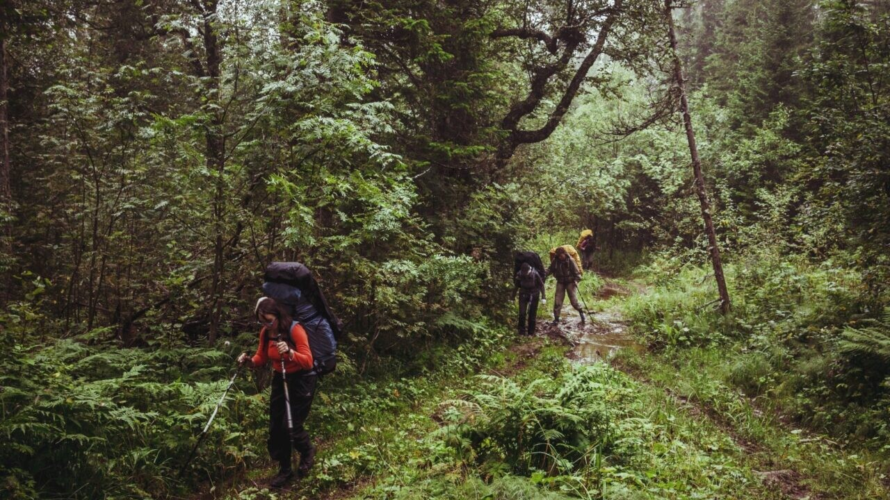 Three hikers walking through a dense green forest.