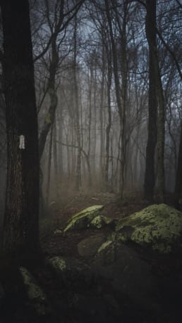 A dark and foggy picture of trees in the woods.