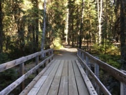 A wooden bridge with handrails over a river leads to a clearing.