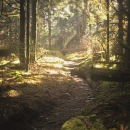 A golden light filters through trees onto a trail through the forest.