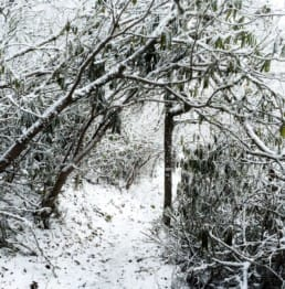 A snow-covered trail winds through a forest also covered in snow.