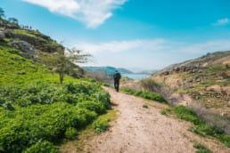 A hiker walks up a sandy path through low green plants.
