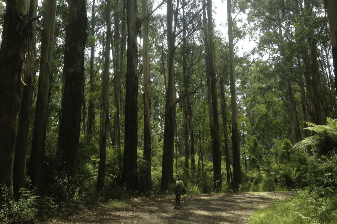 A biker biking through a very lush green forest.