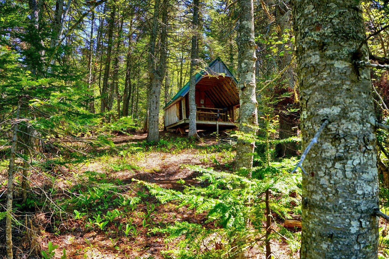 A shelter among some trees on the International Appalachian Trail