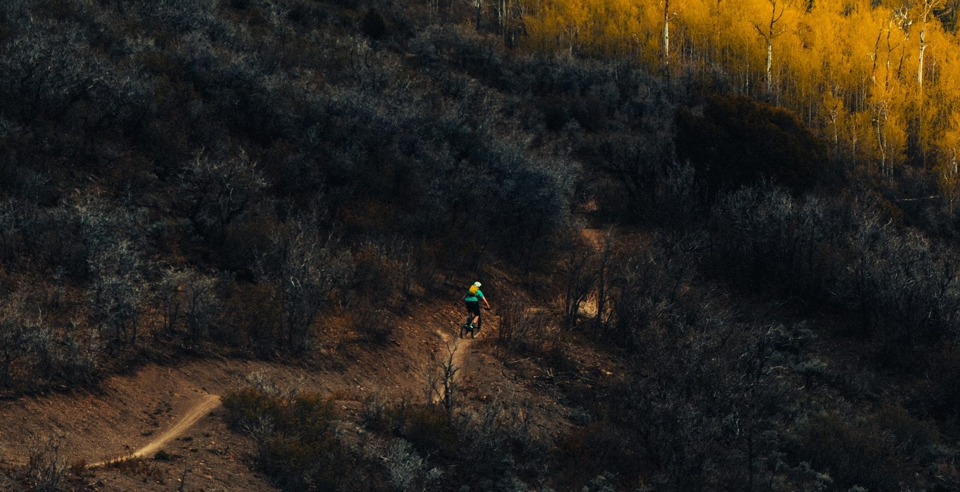 Mountain biker on a trail.