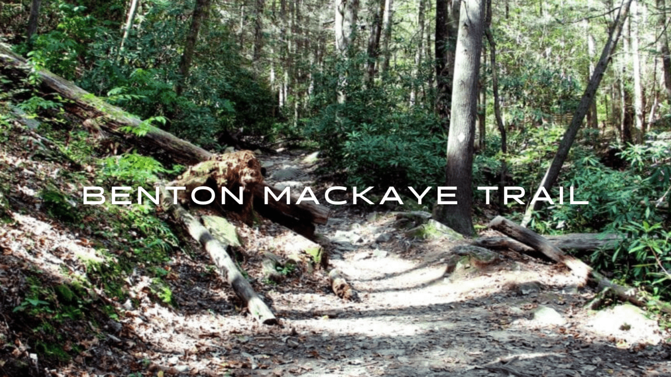 A path winds through a green forest on the Benton Mackaye Trail.