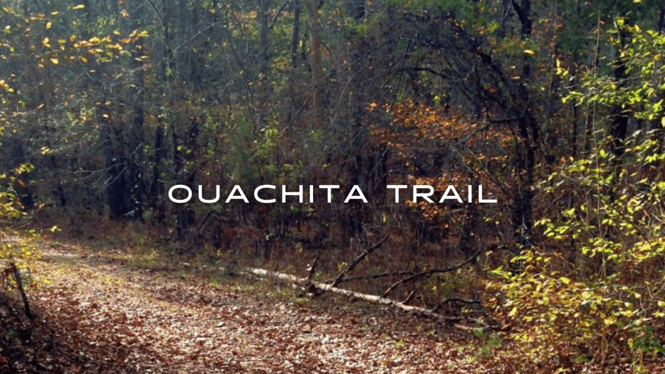 A trail covered in fall leaves winds through a deciduous forest.