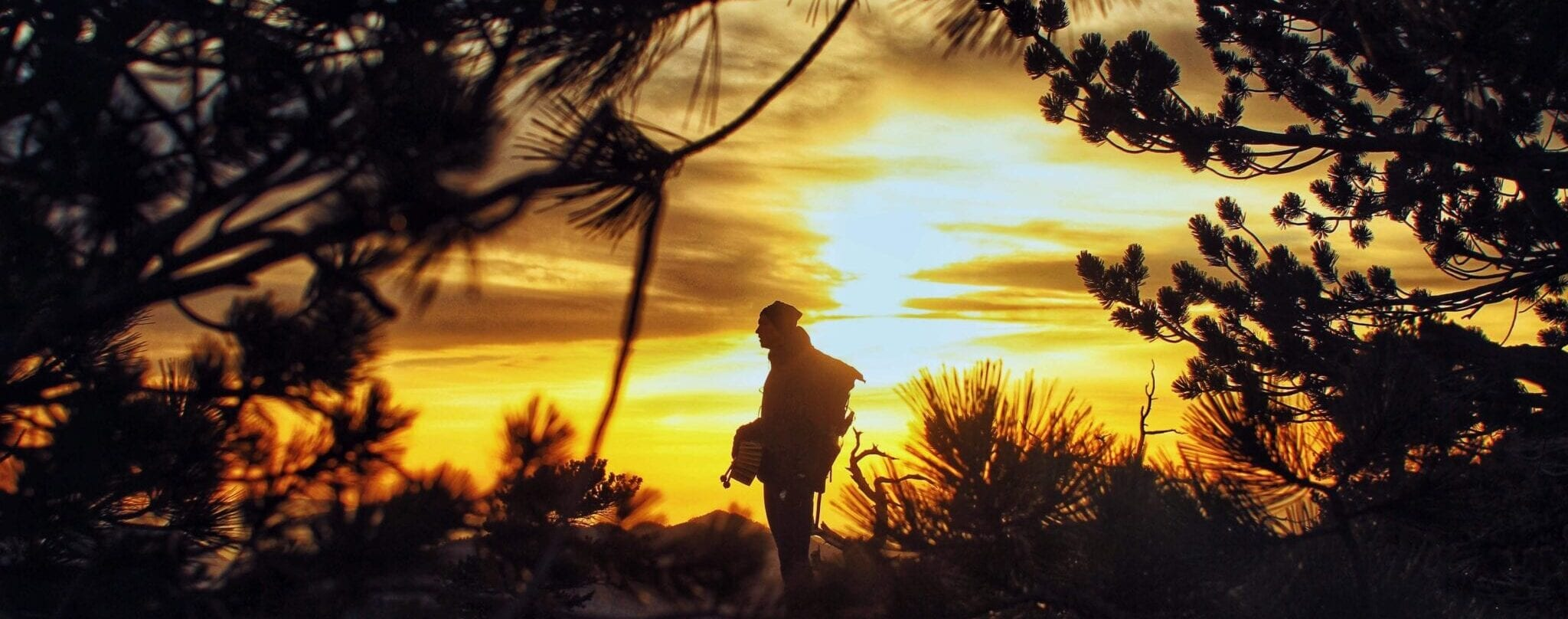 A hiker siloutted in front of a sunset with pine trees all around them.